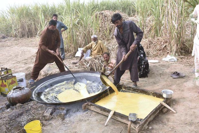 Farmers are busy in making Gur (kind of sugar)