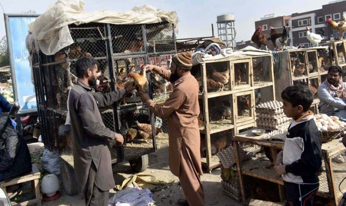 People busy in purchasing chicken from vendor