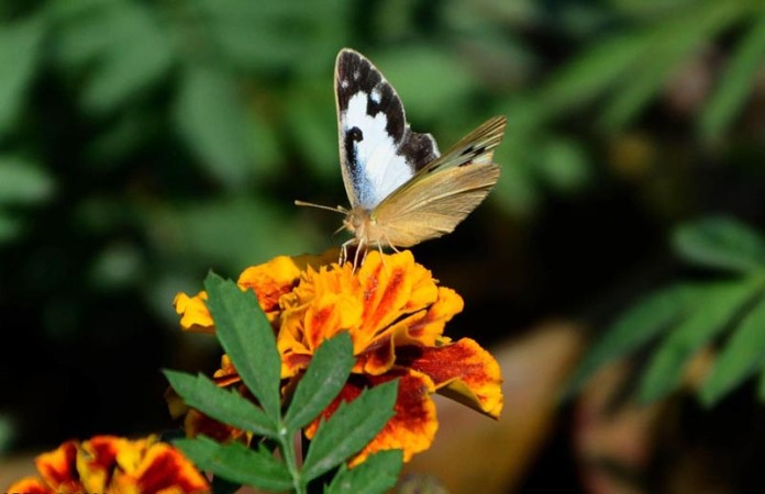A butterfly getting nectar from flower in a local nursery