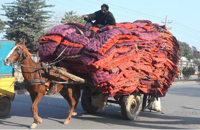 A horse driven cart on the way loaded with a large number of quilts at College Road