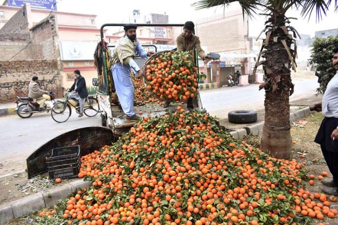 Labourers unloading orange from his delivery truck