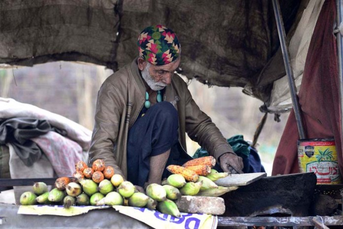 An aged man busy in roasting corn cobs to sell at his roadside setup