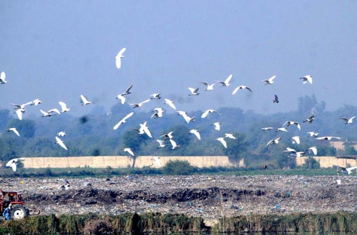 A view of birds flying over the farm area in the city