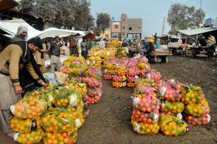 Vendors displaying arranged seasonal fruit oranges to attract the customers at Fruit Mandi.