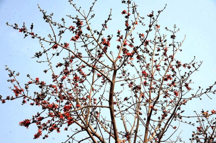 A view of new buds and flowers on trees to mark the spring season in Provincial Capital