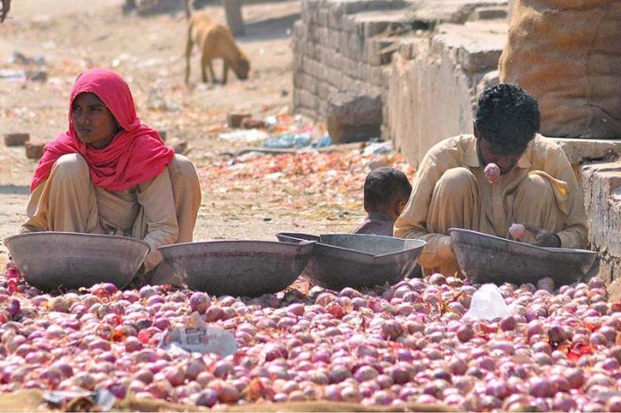 Labourer family sorting good quality of onions at Vegetable Market