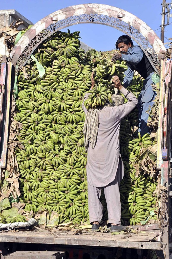 Labourers busy in unloading bananas from delivery truck at Vegetable and Fruit Market