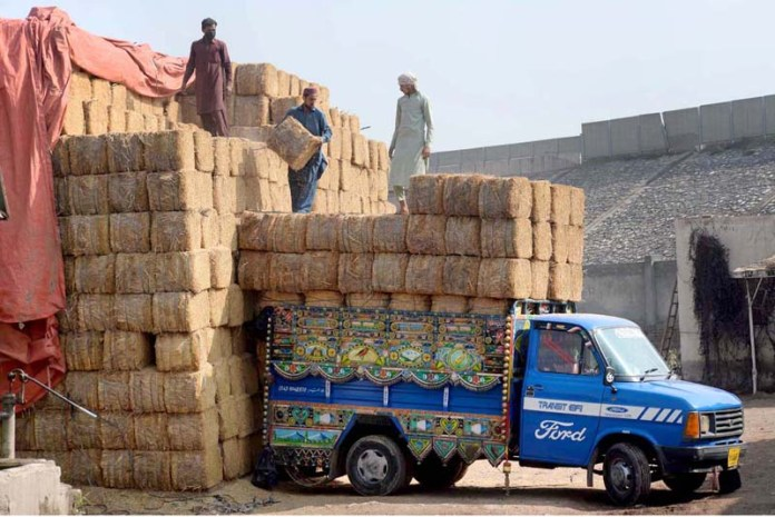 Labourers loading dry fodder on delivery vehicles near Chamkani Road