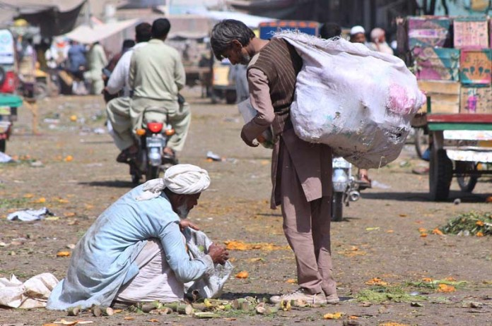An elderly person searching fruit and vegetable from garbage discarded by vendors at Vegetable Market