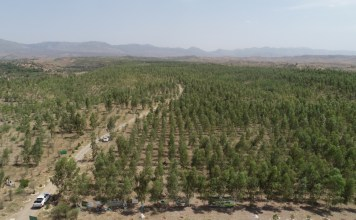 Massive plantation: Pakistan ahead of its commitment on green house gases emissions