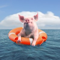 "Never Say ""Pig"" on a Boat - Appalachia's Superstitions and Old Wives' Tales"