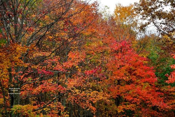 Vivid Autumn Colors In High Knob Massif