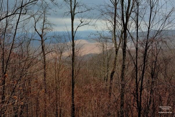 Looking Across Proposed Cut-Burn Area