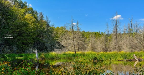 Wide Floor of High Elevation Wetland Valley - High Knob Massif