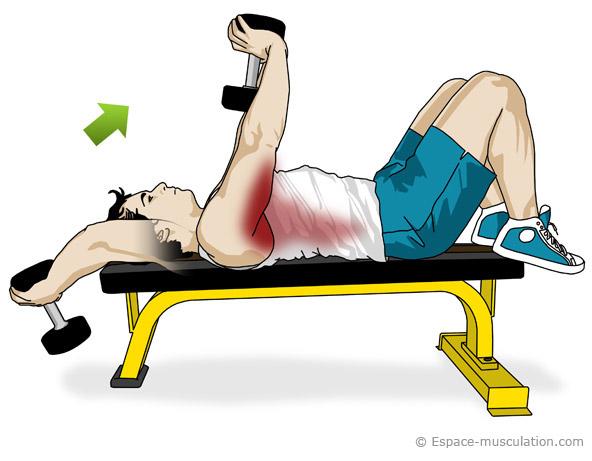 Exercice Pec Haltere Muscu Maison