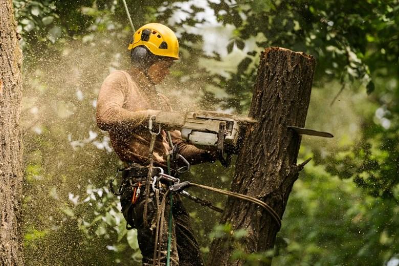 Tree-Removal-Croydon