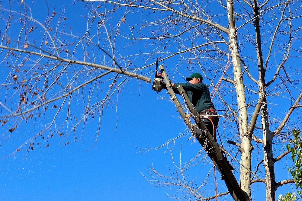 Get Best Tree Trimming Services in Philadelphia