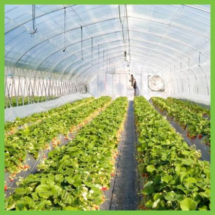 What are the secrets behind the popularity of hydroponic farming?