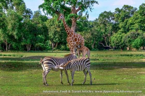 Calauit Safari Busuanga Coron Palawan -025