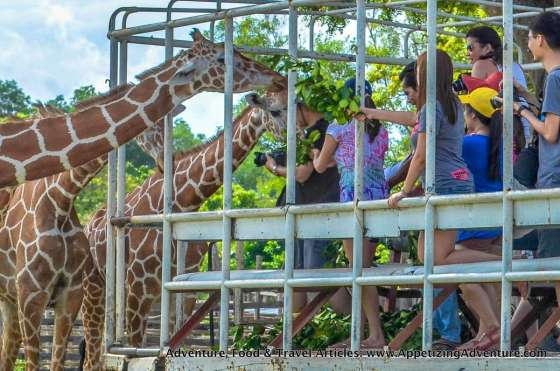 Calauit Safari Busuanga Coron Palawan -038