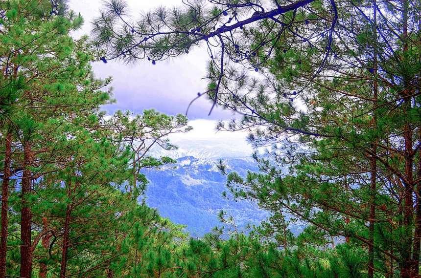 tree-top-adventure-baguio-view-002