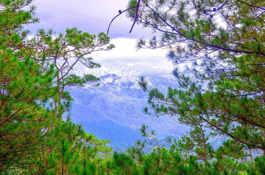 tree-top-adventure-baguio-view-003