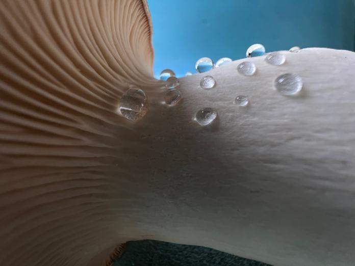 Macro photo of a mushroom taken on iPhone 13 Pro's Ultra Wide camera.