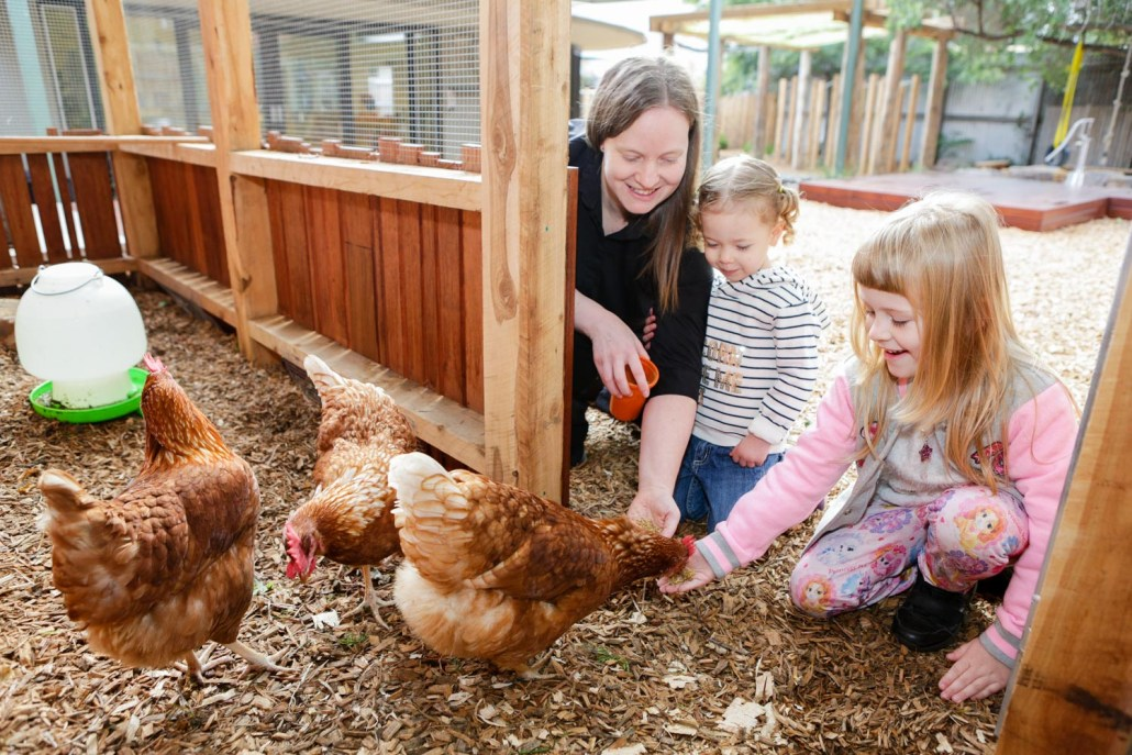 Outdoor Chook Pen