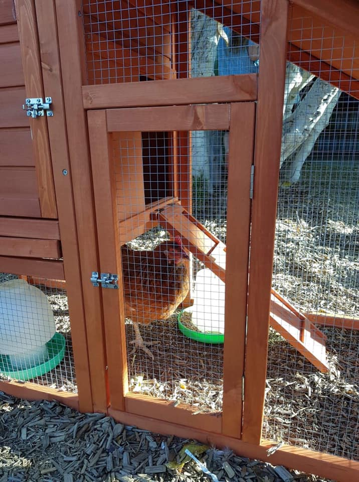 Sarah the chicken - Child care is about animals too!
