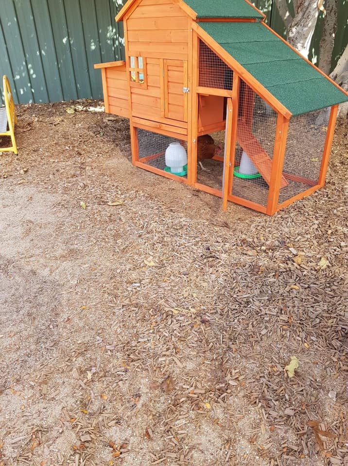 chicken coup - Child care is about animals too!