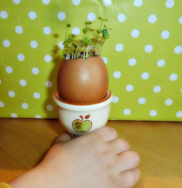 planting seeds in eggshell planters