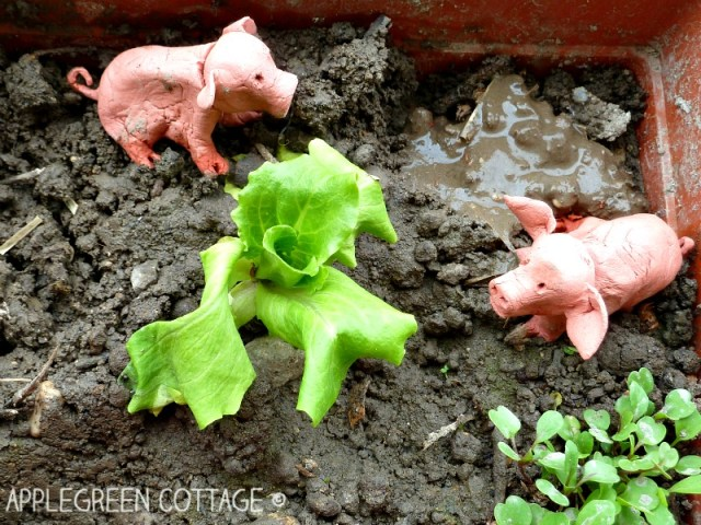 mini garden for kids on the balcony - sprouting