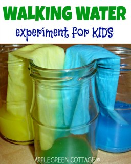 Walking water experiment for kids