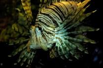 Parrot Fish-Edit-Edit-Edit