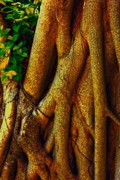 TreeFlowers-2