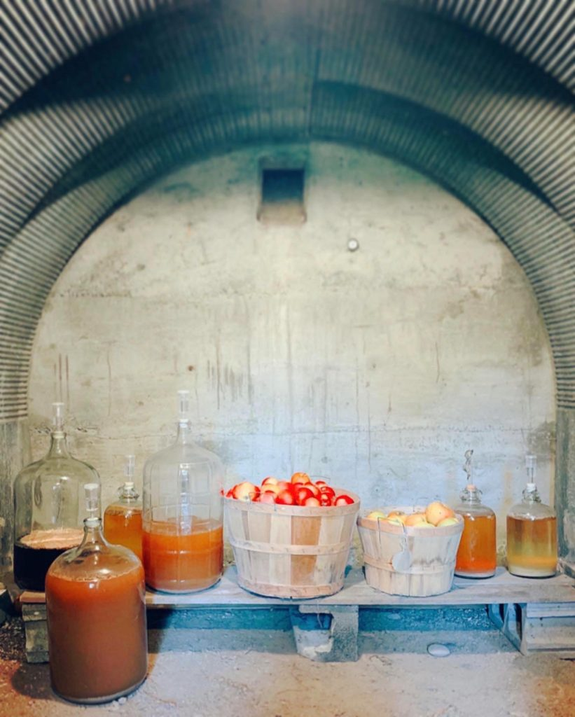 apples in baskets and cider in carboys and demijohns, keeping cool in the root cellar.