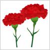 母の日に送る定番の花、カーネーションのイラスト素材