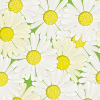 春にたくさんの花を咲かせるマーガレットのイラスト