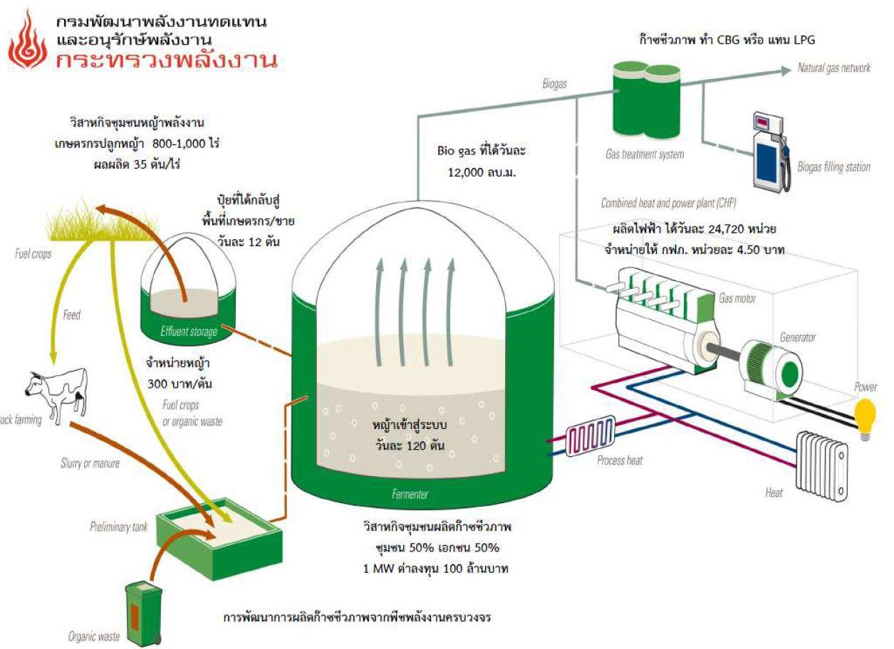 จากพืชไร่กลายเป็นพลังงานไฟฟ้า_04