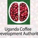 Uganda Coffee Development Authority Recruitment Application Form