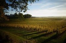 Couché de soleil sur les vignes en Dordogne
