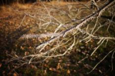 gel sur les arbres