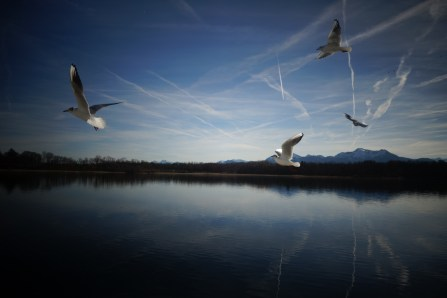 mouettes chiemsee