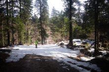 Forêt Slovène