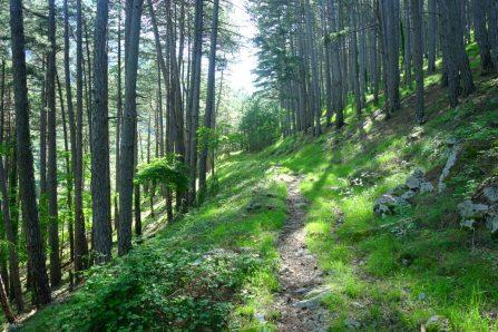 Belle forêt en remontant sur la PPT
