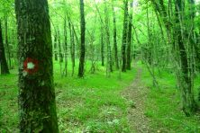Descente dans la forêt