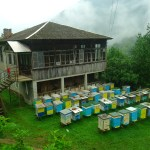 Maison géorgienne, Kintrishi
