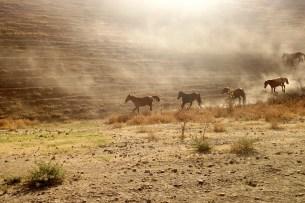 Chevaux dans les montagnes kirghizes