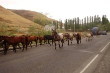 Sortie du troupeau
