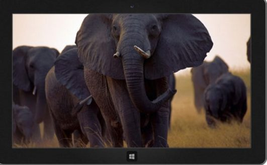 African_Wild_Theme_for_Windows_Download